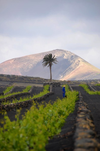 wine tours lanzarote tour 2