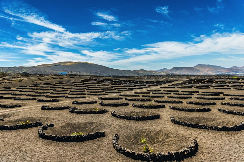 Wine tours of lanzarote
