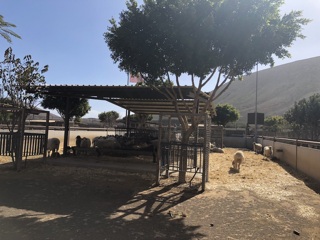 Long Term Car Rental Lanzarote