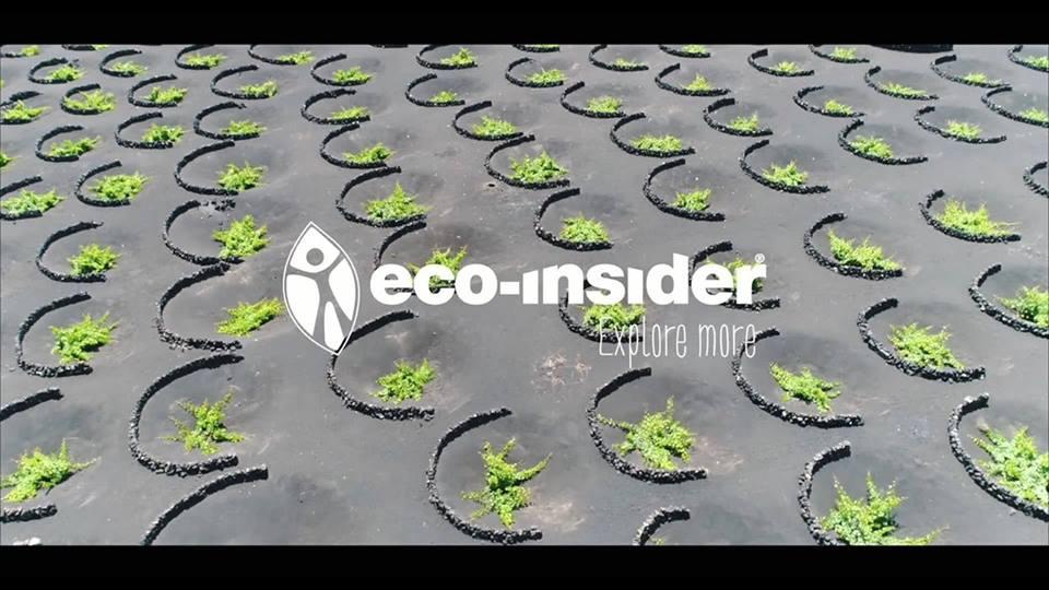 Eco Insider Bodega Hopping