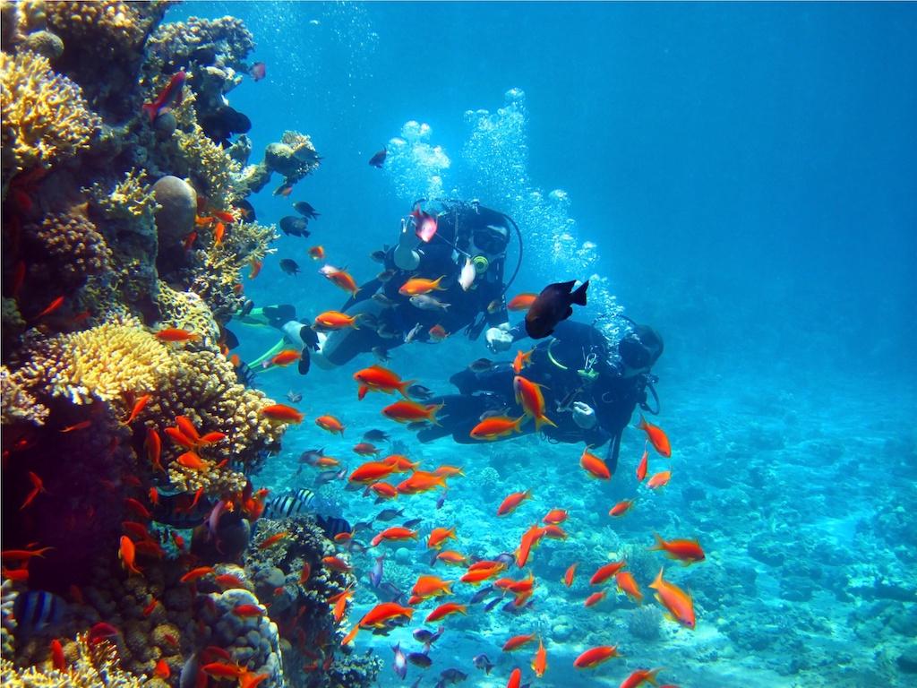 Sea Life Lanzarote
