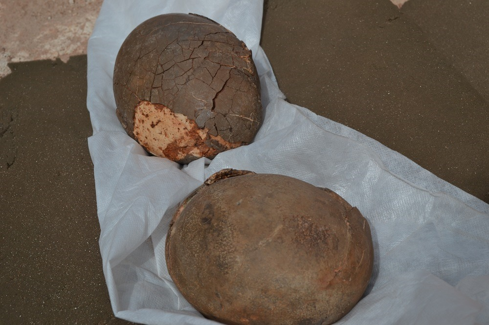 Fossil eggs
